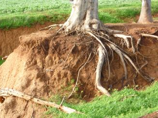 Exposing roots